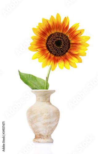 beautiful sunflower in a vase isolated on white