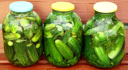 Fresh marinated cucumbers in the garden