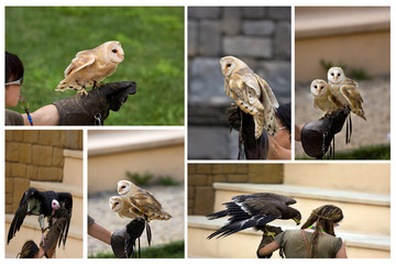 collage di falconieri