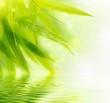 Fototapeten,bambus,bambus,blatt,laubwerk
