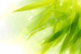 Fototapete Papier - Foliage - Pflanze