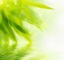 Bambou humide laisse avec reflet dans l'eau.