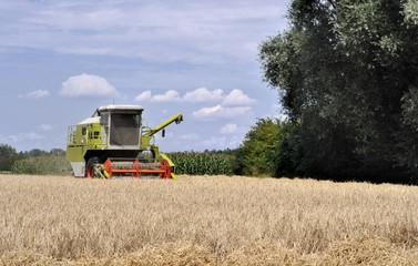 Maedrescher im Sommer mit Getreidefeld