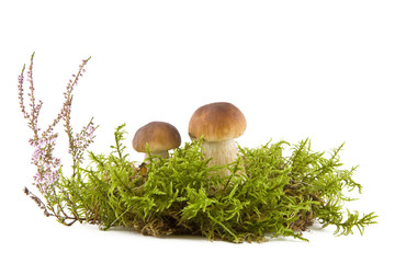 Two fresh mushrooms in moss