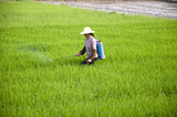 Asian farmers spraying pesticides in rice fields poster