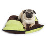 carlin sur son tapis - pug on the carpet