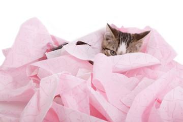 chaton jouant dans papier WC rose