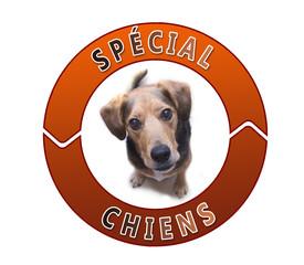 Bouton spécial chiens