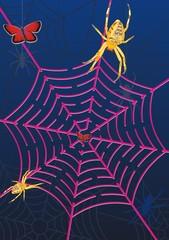 spider web labyrinth