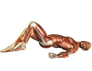 Muskelaufbau Mann liegend