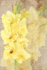 gladiolus on grunge background