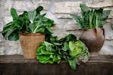 verdura contadina poster