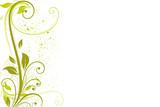 Fototapety floral vert été