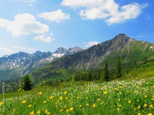 Leinwandbilder,berg,blume,blumenwiese,wiese