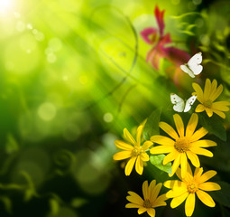 Abstract art summer background. Flower and butterfly