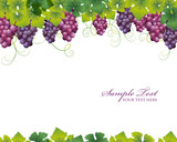 Fototapety grape background