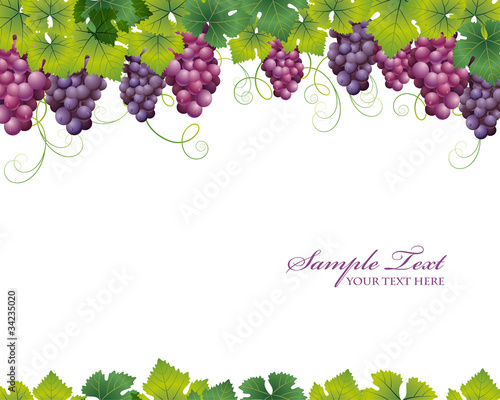 grape background
