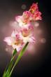 Gladiolus Autumn Flower Design