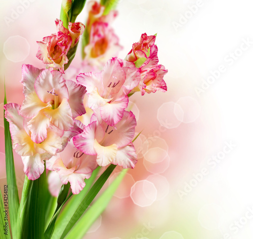 Gladiolus Autumn Flower Border Design