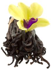 vanille orchidée