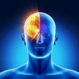 Part of brain - right HEMISPHERE poster