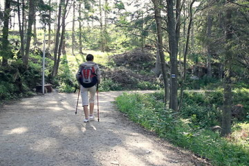 Woman nordic walking in the park, forest, dolly shot