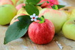 Red,green and yellow apples with leaves