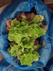 Gemüse im Beutel