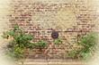 alte Ziegelmauer mit Rosenranken