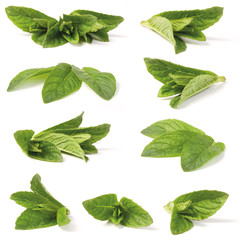 Various green peppermint