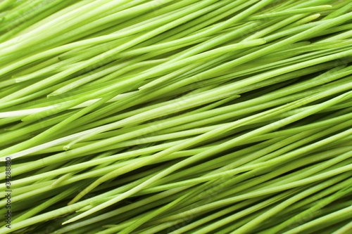 Green Blades of Grass Texture Background