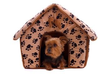 kleiner Hund in der Hundehütte