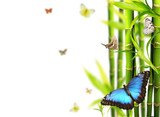 Fototapety Exotic butterflies in bamboo, isolated on white background