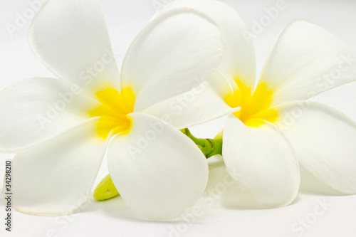 Plumeria flowers closeup on white background