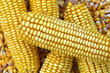 Background of Corn Cob and corn kernel