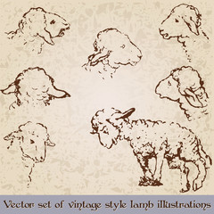 Vintage style cute lamb illustrations