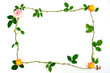 薔薇と枝のフレーム