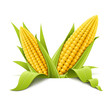 couple corncob vector
