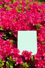 letter[azalea]_01