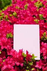 letter[azalea]_06