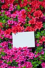 letter[azalea]_47