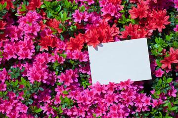 letter[azalea]_46
