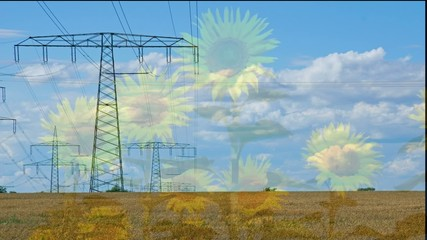 Sonnenblumen und Strommast