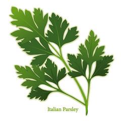 Italian Flat Leaf Parsley Herb