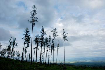 Trees against evening sky, High Tatras mountains