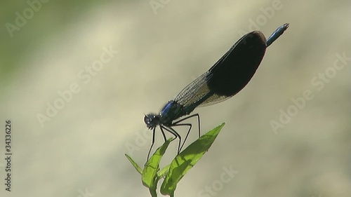 dragonfly fly from plant