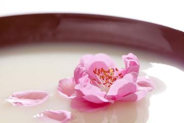 甘酒と桃の花びら