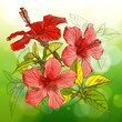 Hibiscus flowers & green background