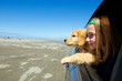 kid and puppy looking out window of a moving car - 34337854