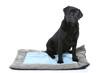 chien noir assis sur son tapis - labrador